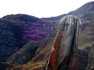 Цветение маральника на Алтае, каменный воин